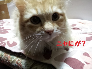チャコ姉1