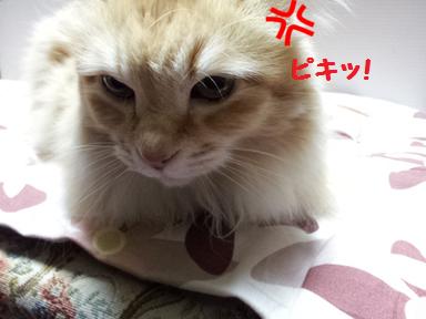 チャコ姉2