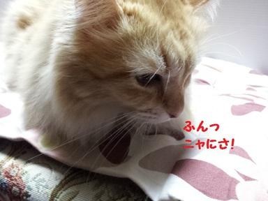 チャコ姉3