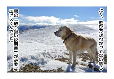 羊の国のラブラドール絵日記シニア!!夢の初日7