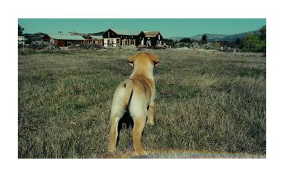 羊の国のラブラドール絵日記シニア!!クロエちゃん幼少時代写真4