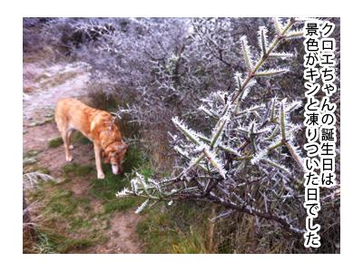羊の国のラブラドール絵日記シニア!!特別な日のご飯写真3