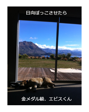 羊の国のラブラドール絵日記シニア!!ワナカ写真日記5