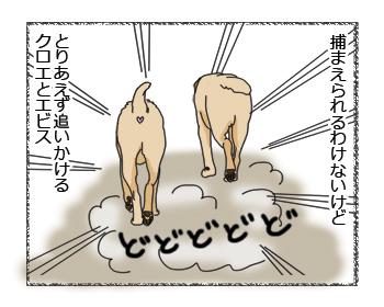 羊の国のラブラドール絵日記シニア!!チームワーク2