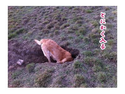 羊の国のラブラドール絵日記シニア!! 写真日記「地球の穴」3