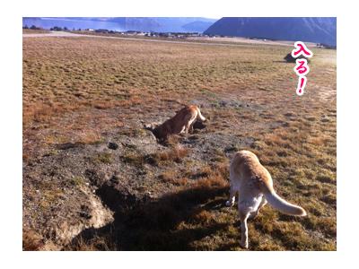 羊の国のラブラドール絵日記シニア!! 写真日記「地球の穴」4