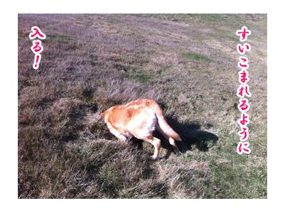 羊の国のラブラドール絵日記シニア!! 写真日記「地球の穴」5
