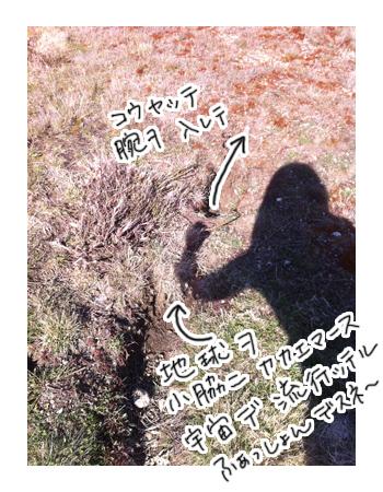 羊の国のラブラドール絵日記シニア!! 写真日記「地球の穴」7
