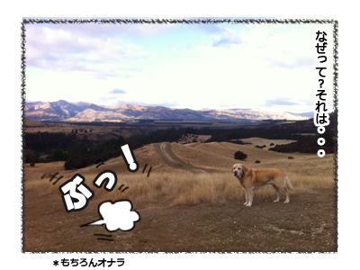 羊の国のラブラドール絵日記シニア!!お散歩アウトドア心得3