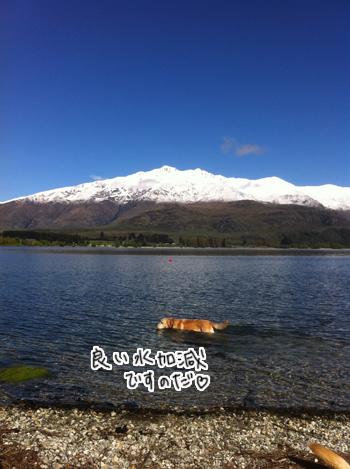 羊の国のラブラドール絵日記シニア!! 写真3