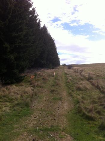 羊の国のラブラドール絵日記シニア!! ある日森の外写真