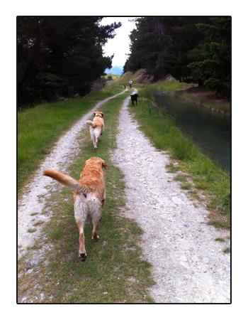 羊の国のラブラドール絵日記シニア!!写真1