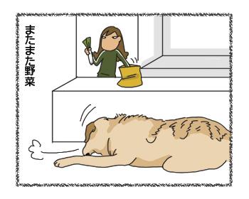 羊の国のラブラドール絵日記シニア!! わかりやすい4コマ漫画3