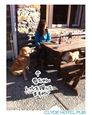 羊の国のラブラドール絵日記シニア、エビスと旅するニュージーランド「Clydeパブ」