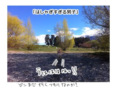 羊の国のラブラドール絵日記シニア!!写真日記、春だ!モッテコイ!5