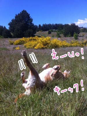 羊の国のラブラドール絵日記シニア!! 4コマ漫画「クロエちゃんの憂い」写真1