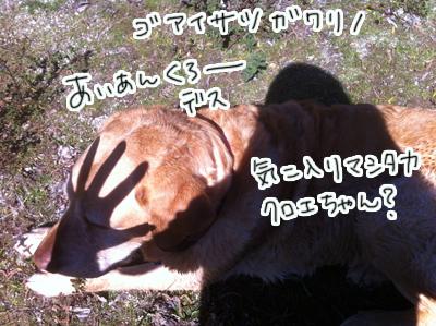 羊の国のラブラドール絵日記シニア!! ピクニック写真4