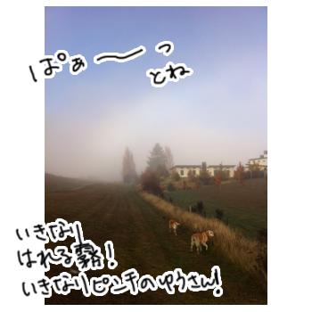 羊の国のラブラドール絵日記、一寸先は霧3