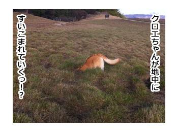 羊の国のラブラドール絵日記シニア!!野生のカン6