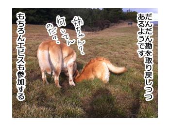 羊の国のラブラドール絵日記シニア!!野生のカン7