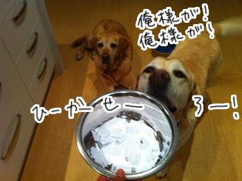 羊の国のラブラドール絵日記シニア!! 引退犬支援カレンダー当選者の皆様1