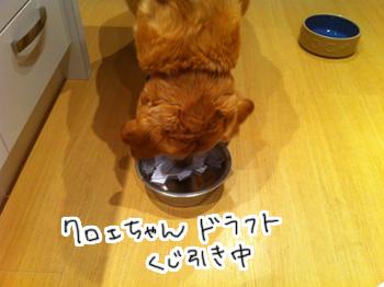 羊の国のラブラドール絵日記シニア!! 引退犬支援カレンダー当選者の皆様4