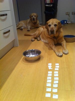 羊の国のラブラドール絵日記シニア!! 引退犬支援カレンダー当選者の皆様7