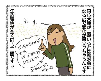 羊の国のラブラドール絵日記シニア!!順番かいっ!!2