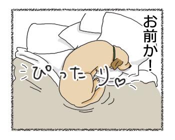 羊の国のラブラドール絵日記シニア!!「シンデレラの靴」漫画5