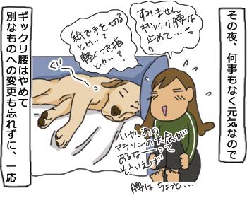 羊の国のラブラドール絵日記シニア!!「ギックリ腰の対価」イラスト2
