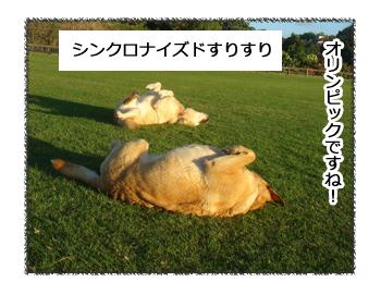 羊の国のラブラドール絵日記シニア!!得意種目1