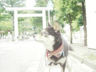 CIMG7846_20120715100206.jpg