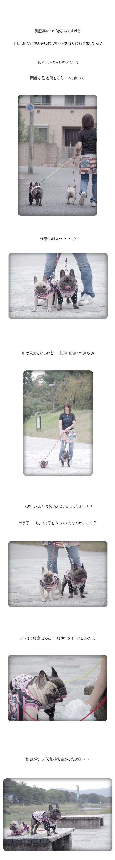 加茂のお散歩♪