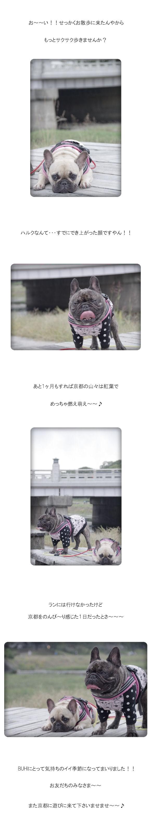 加茂のお散歩♪♪