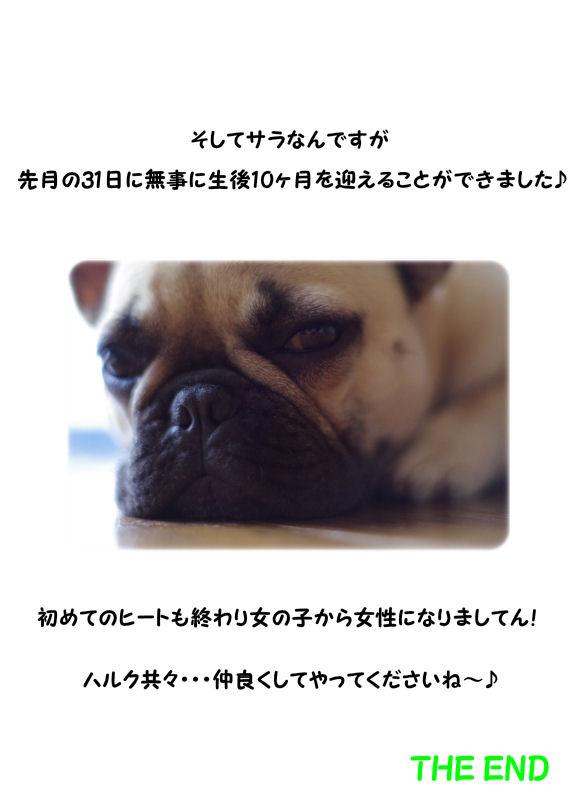COBUHI3.jpg