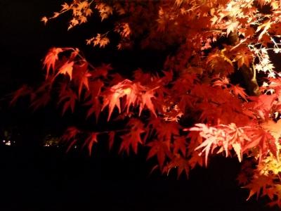 山中湖20141024
