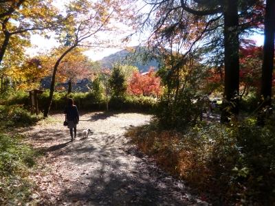 嵐山渓谷20141127