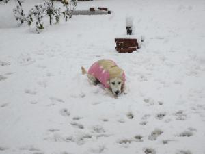 なずなの初雪2