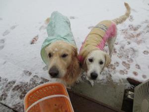 雪とツインズ
