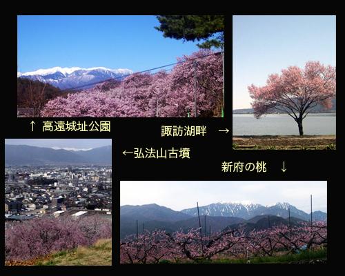 2013-sakura2.jpg