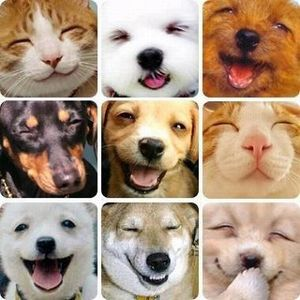 wan smile 1
