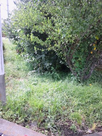 2012-09-04草刈り