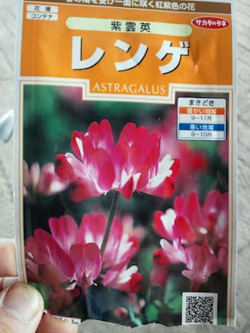 2012-09-04れんげ