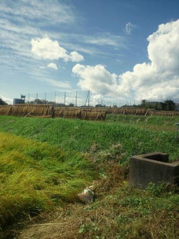 2012年10月1日隣の稲