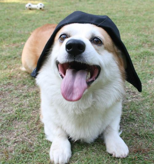 帽子を被るリッチ