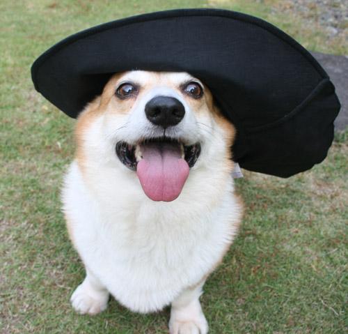 帽子を被るハニー