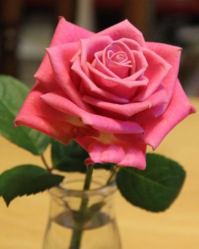 主人にバラの花
