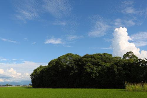 田んぼと森