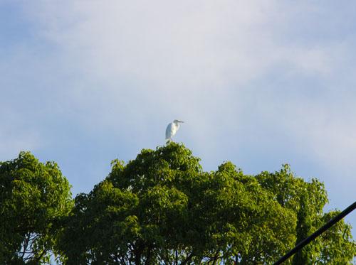 木の上に白鷺が