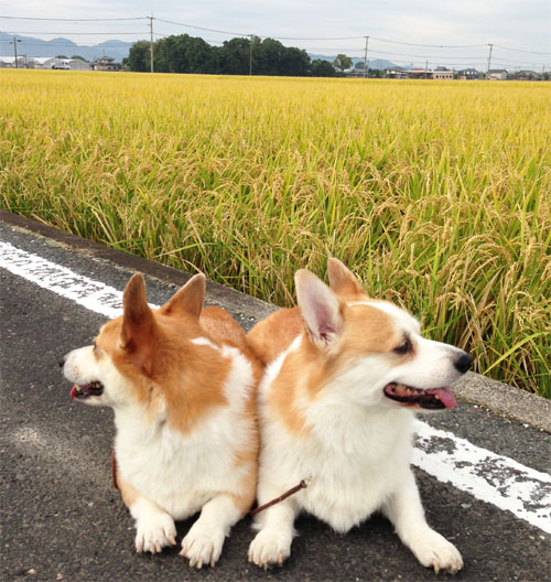 稲と2ショット1
